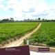 Quinta de Linhares Avesso Reserve White Wine 2017