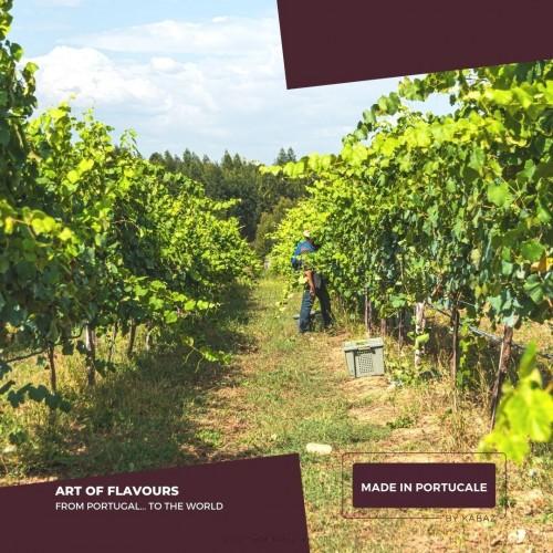 HF Sonhador Alvarinho White Vinhos Verdes 2013